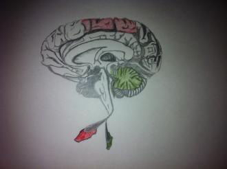 CerebralCerebellum